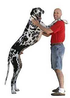 Pasaules garākais suns ir... Autors: MilfHunter Ginesa Pasaules Rekordi 2