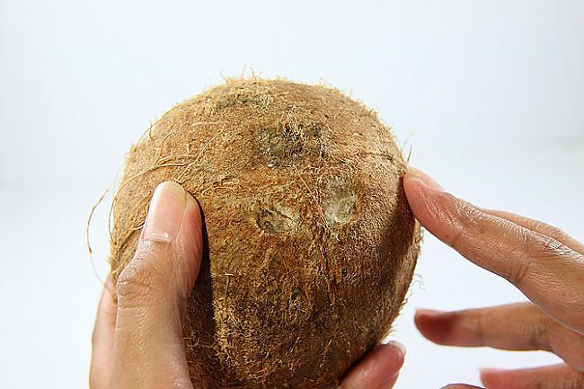 Atrodi kokosrieksta 3... Autors: plunkš Kā iegūt kokosrieksta skaidiņas?