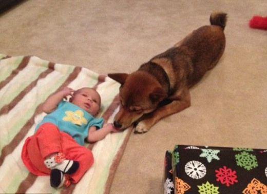 Popularitāti internetā... Autors: Kačuks123 Pārsteidzoši stāsti par suņiem