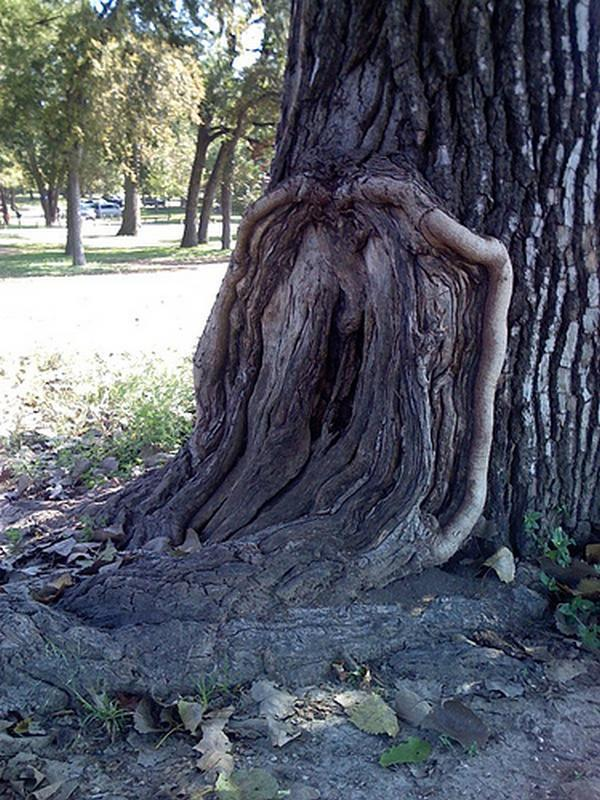 трахнул дерево фото - 3